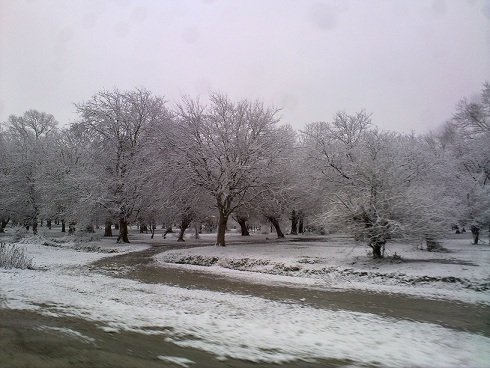 امروز بعد از مدت ها ، برف از حاشیه وارد متن شد ...
